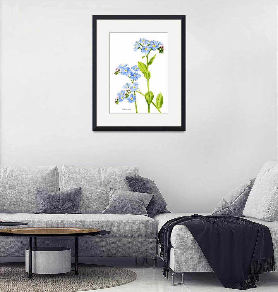 """""""Forget-me-nots (white background)""""  (2010) by Pacific-NW-Watercolors"""