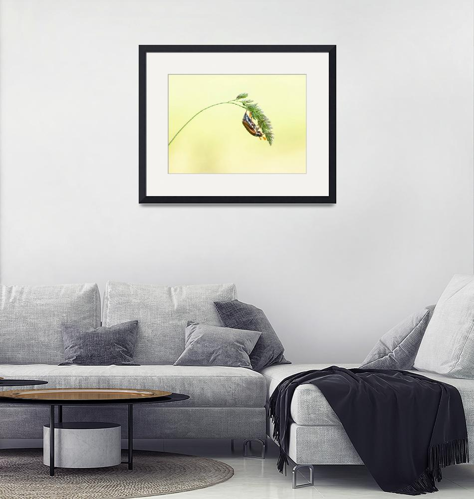 """""""Insect pictures""""  by TravelSync27"""