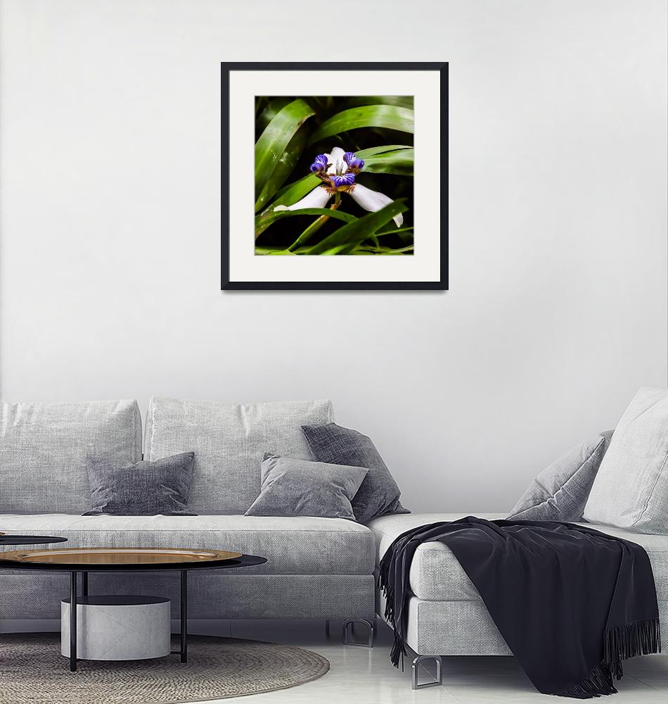 """""""tiny wild orchid in the forest""""  (2013) by puravidaviews"""