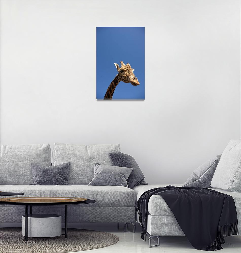 """Giraffe in the sky""  (2009) by victoriazeoli"