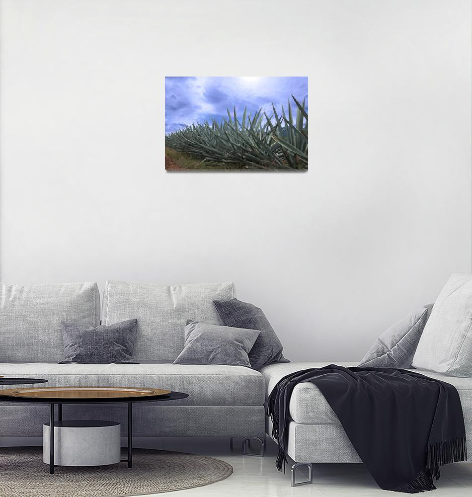 """""""maguey san bartolome1""""  (2012) by charker"""