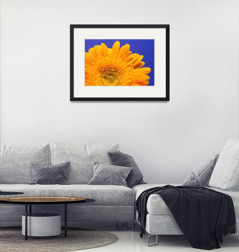 """Gerbera Daisy Against Blue""  (2010) by LauraM"