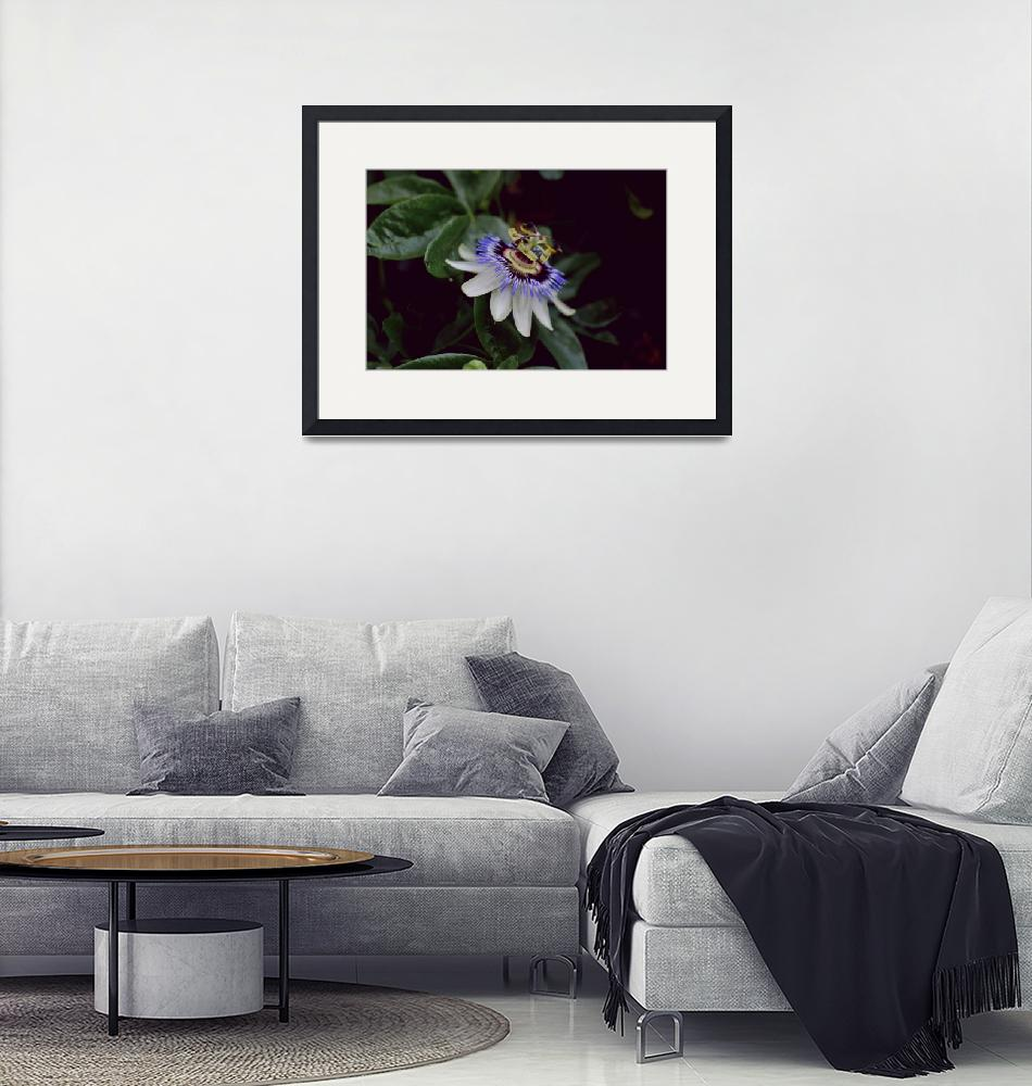 """""""Passion Flower""""  (2009) by maisiegliddon"""