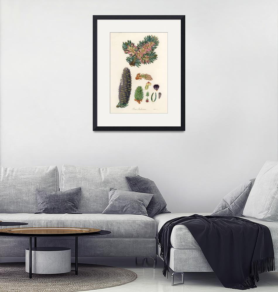 """Vintage Botanical Balsam""  by FineArtClassics"