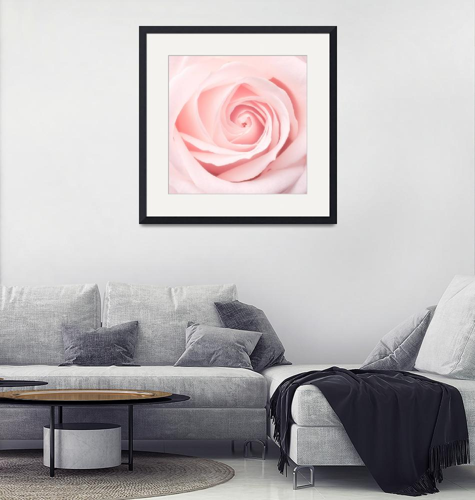 """""""Rose""""  (2008) by JazzBoo"""