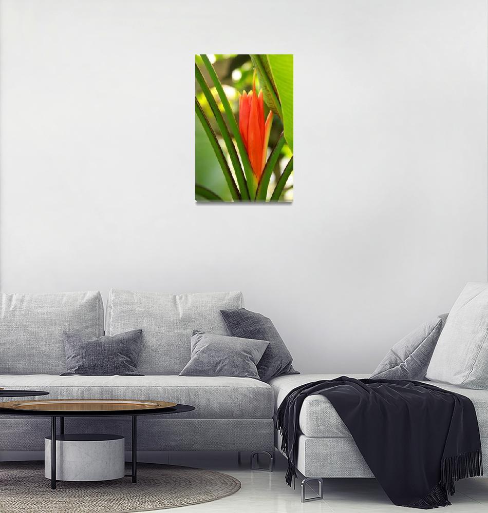 """Ridiculously Beautiful Botanicals 6""  (2012) by VisualSplash"