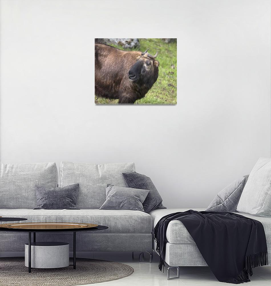 """""""Takin""""  (2017) by SederquistPhotography"""