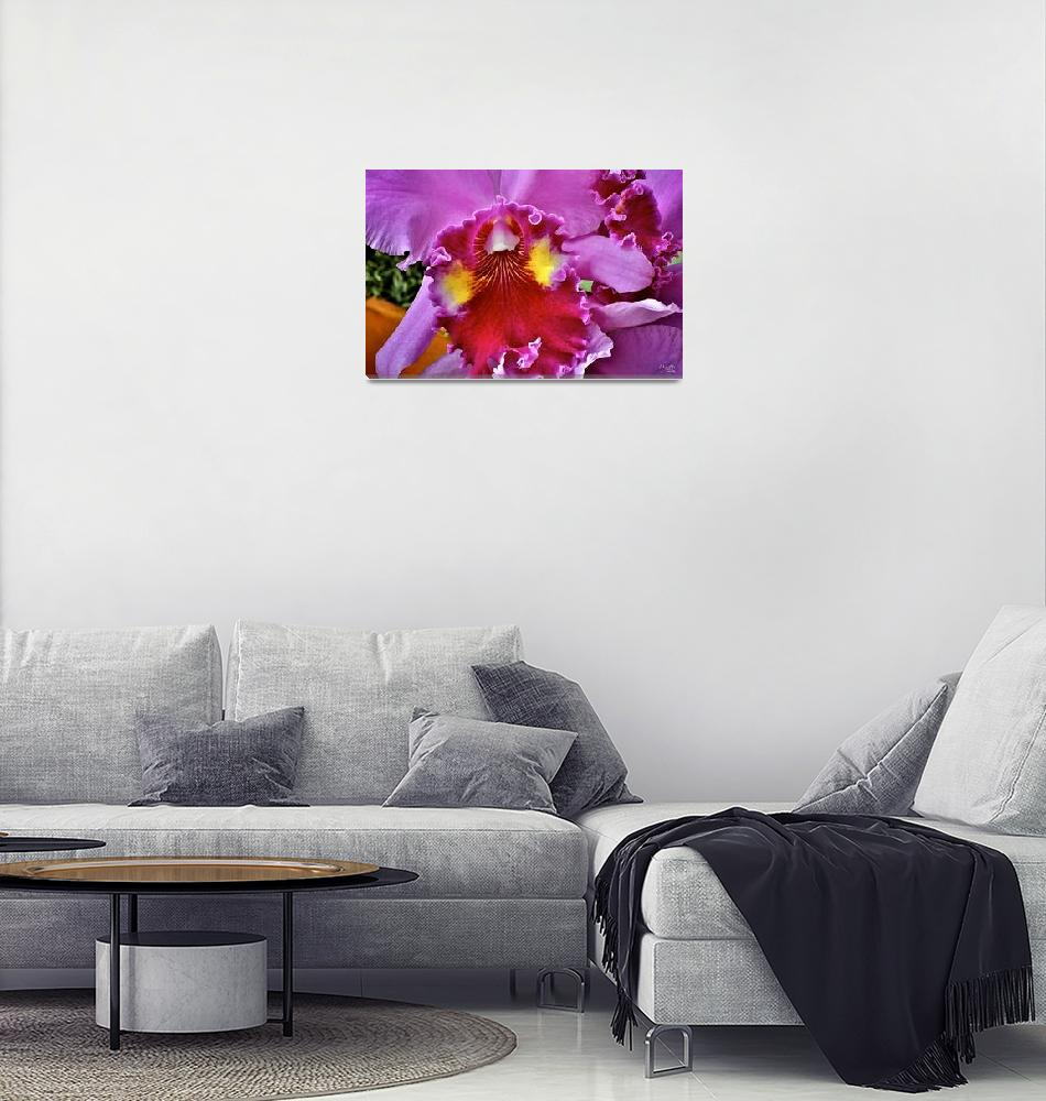 """""""Orchid Beauty""""  (2006) by DigiPix"""
