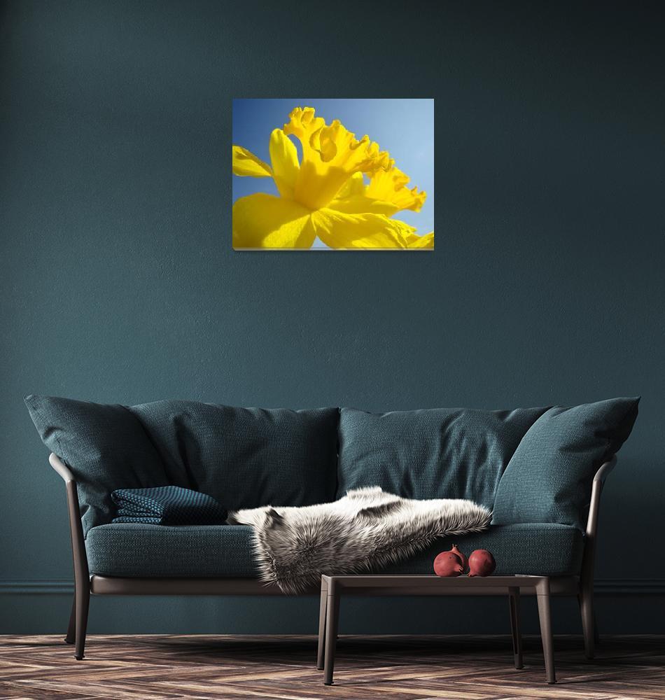 """Spring Artwork Sunlit Daffodil Flowers Floral Art""  (2010) by BasleeTroutman"