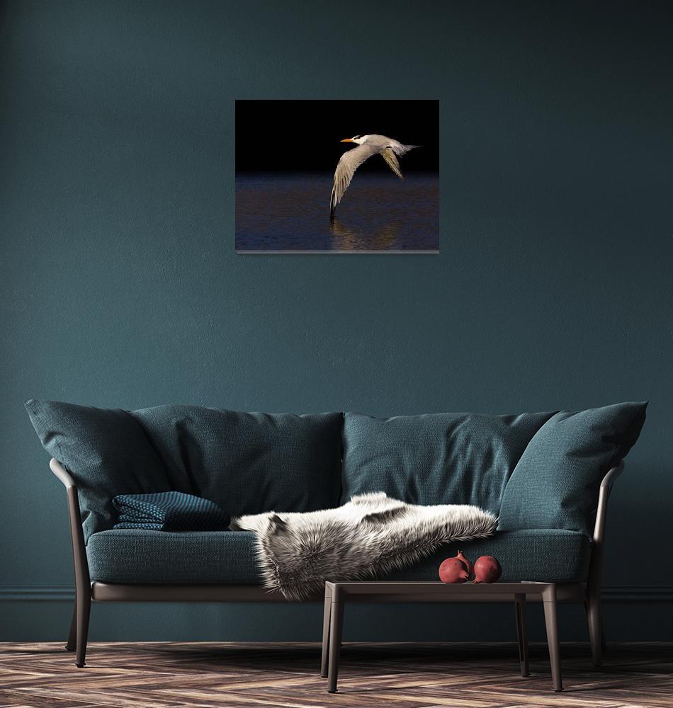 """Royal Tern, Morro Strand State Beach, Morro Bay, C""  (2007) by mikebaird"