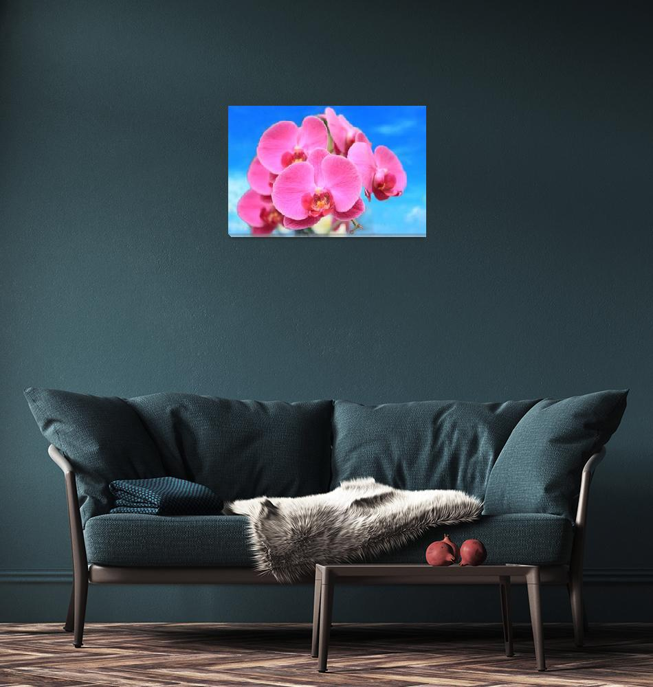 """""""Pink Orchid Blue Sky""""  (2013) by charker"""