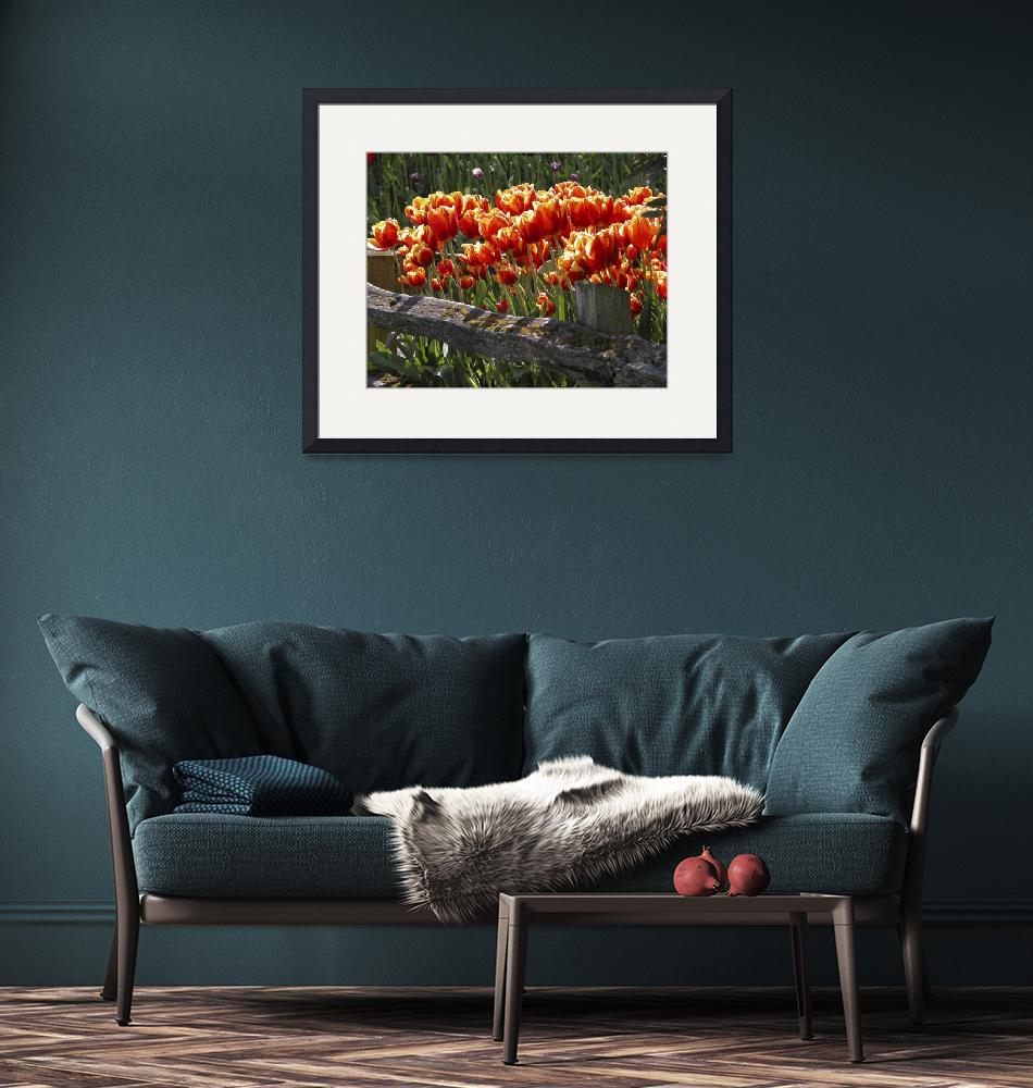 """""""Tulips&Fence N0126""""  by ClotheslineArt"""