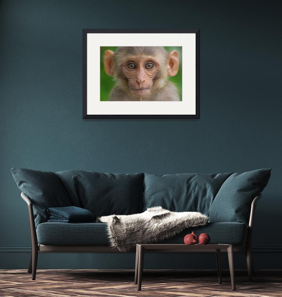 """""""The Rhesus Macaques Monkey""""  (2017) by RobbieRoss"""