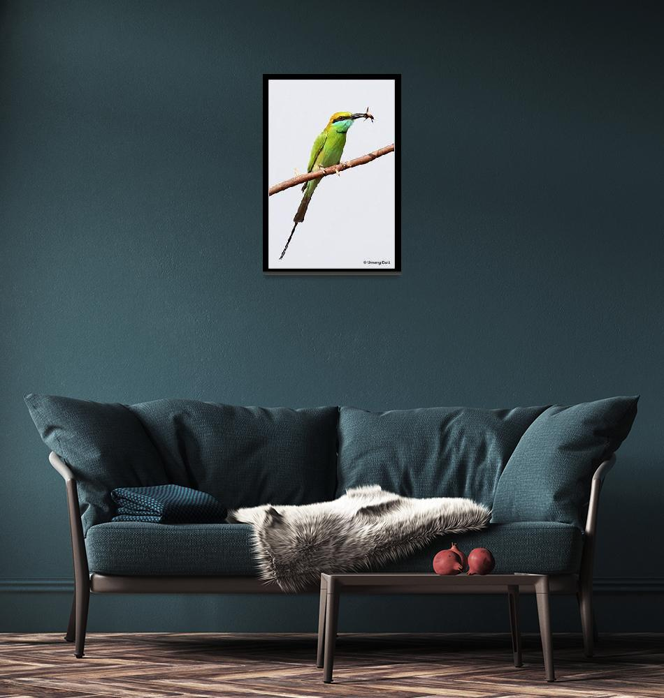 """""""The Little Green Bee-eater ( Merops orientalis)""""  (2007) by umang"""