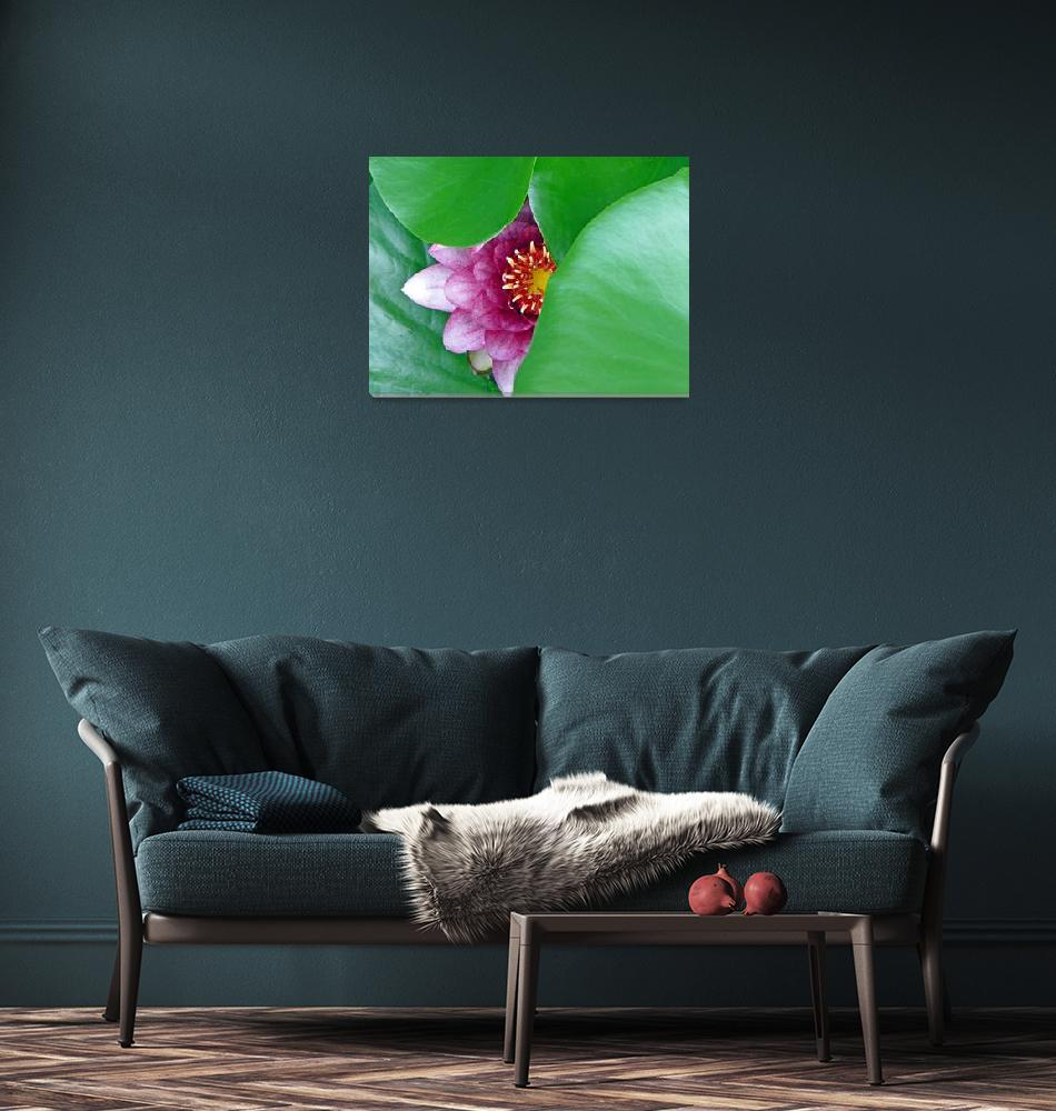 """""""Pink Water Lily""""  (2016) by FrankieCat"""