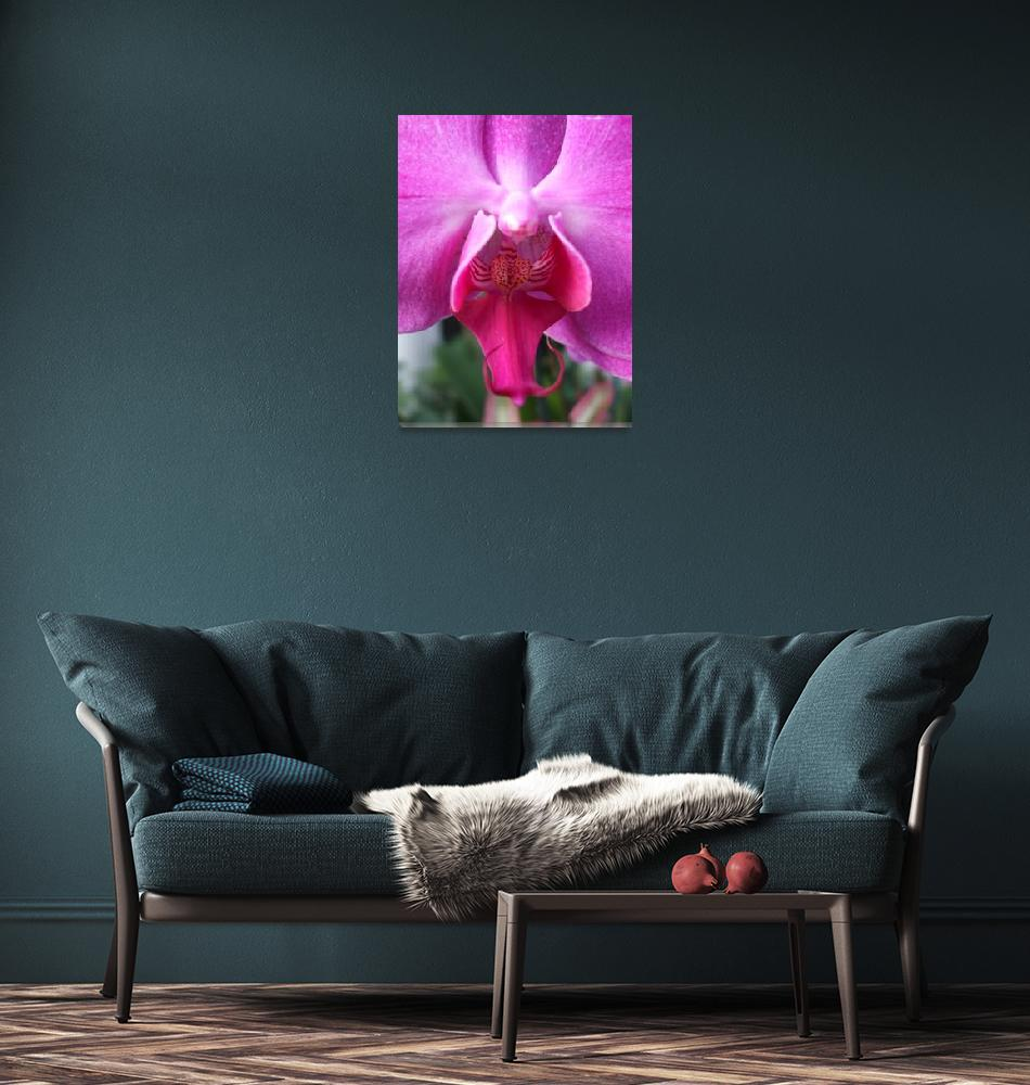 """""""Pink orchid - extreme closeup""""  (2009) by MariaK"""