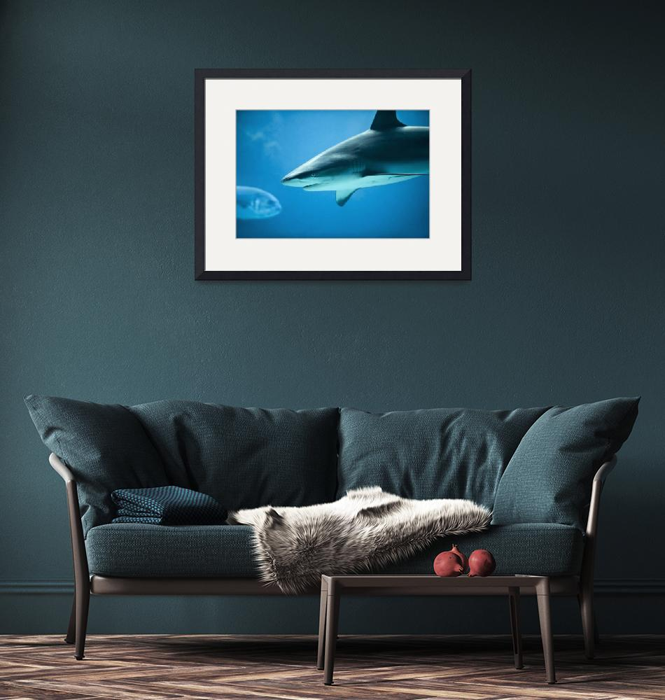 """Caribbean Reef Shark - Marine Life Photography""  (2011) by DAPhoto"