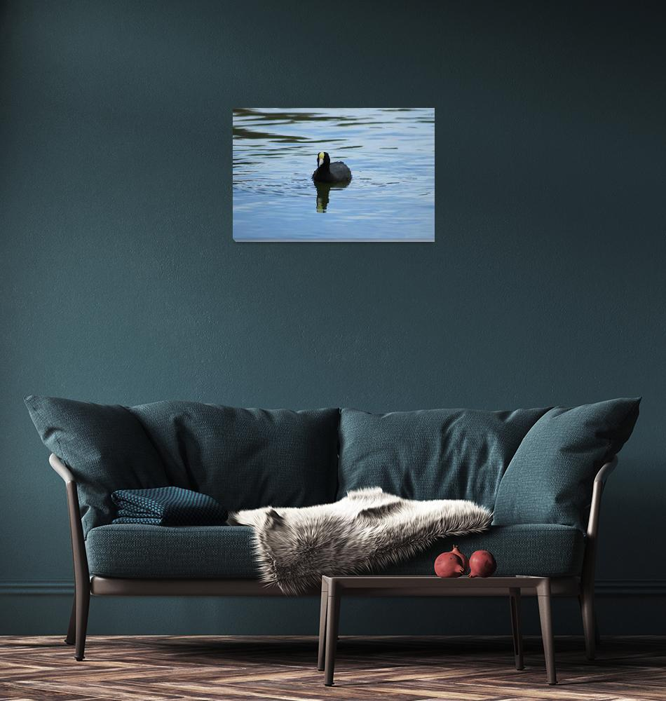 """""""Andean Coot""""  (2015) by rhamm"""