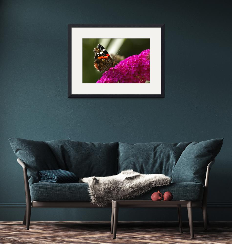"""""""Red admiral""""  (2009) by mellting"""
