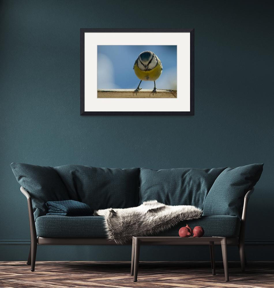 """Blue tit in winter""  (2011) by ImagePassion"