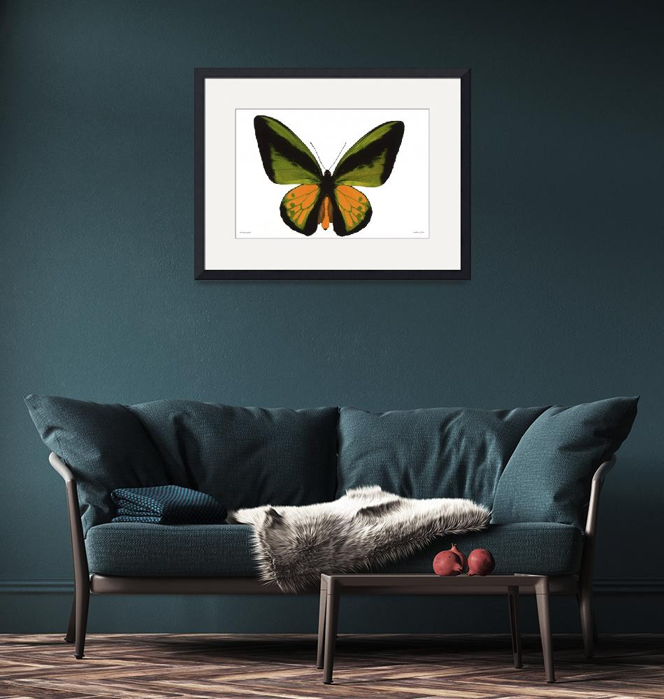 """""""Lm236-1 Ornithoptera goliath""""  (2005) by Williamcastner"""
