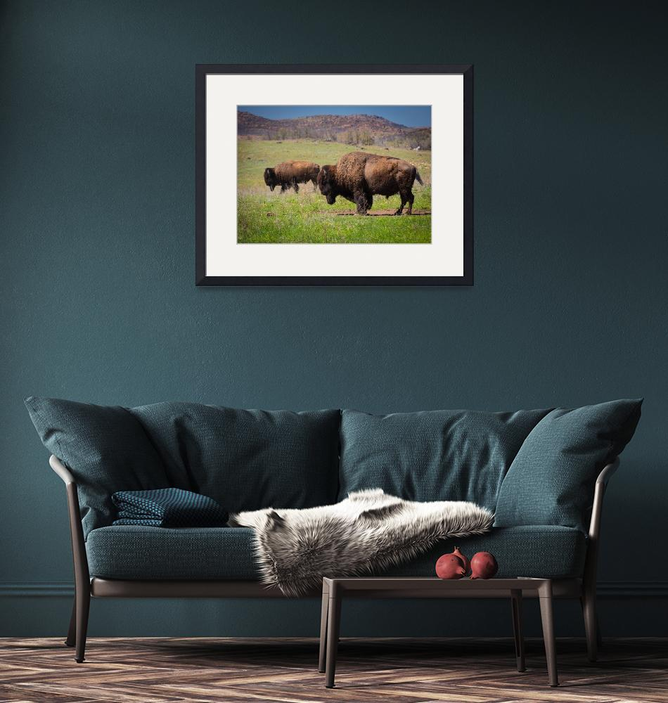 """Grazing Bison""  (2013) by Inge-Johnsson"