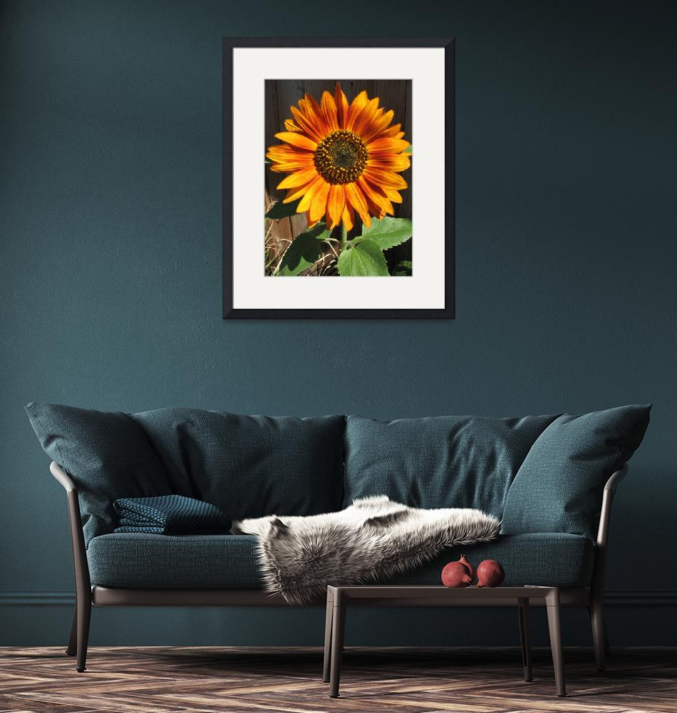 """Sunflower""  by RussellRice"