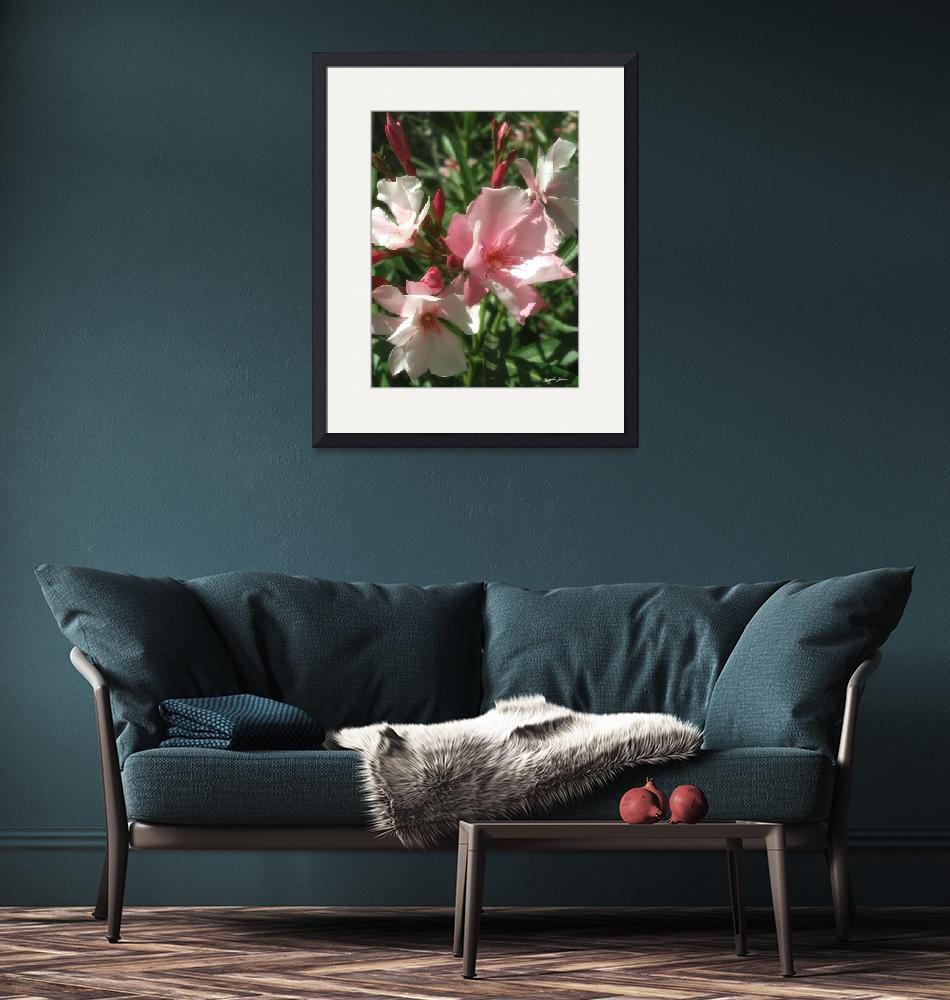 """""""Single Pink Oleander 1""""  (2010) by ChristopherInMexico"""