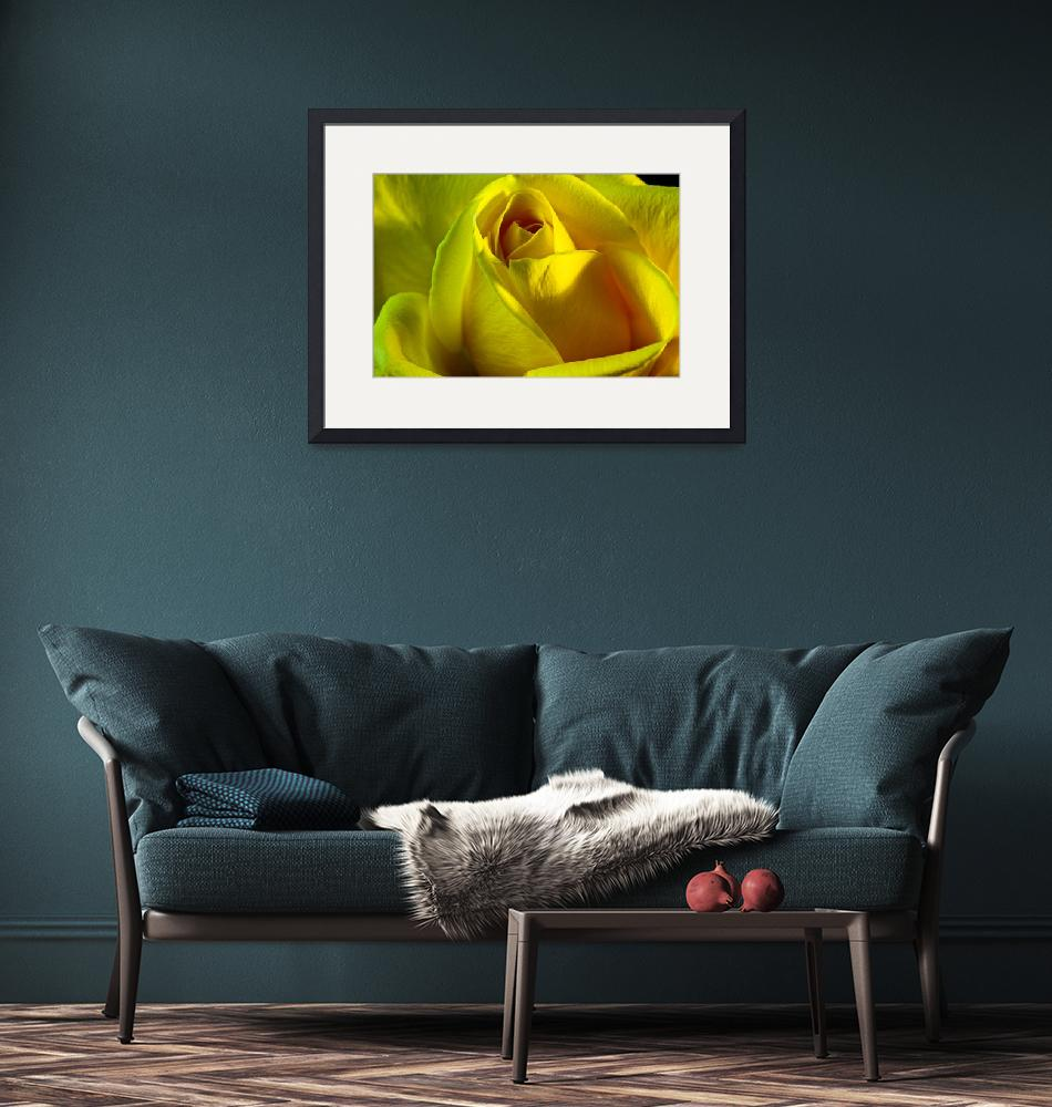 """Yellow Rose""  (2008) by robgerman"