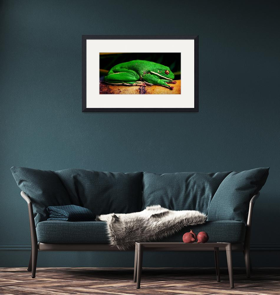 """""""Green tree frog""""  (2012) by shady"""