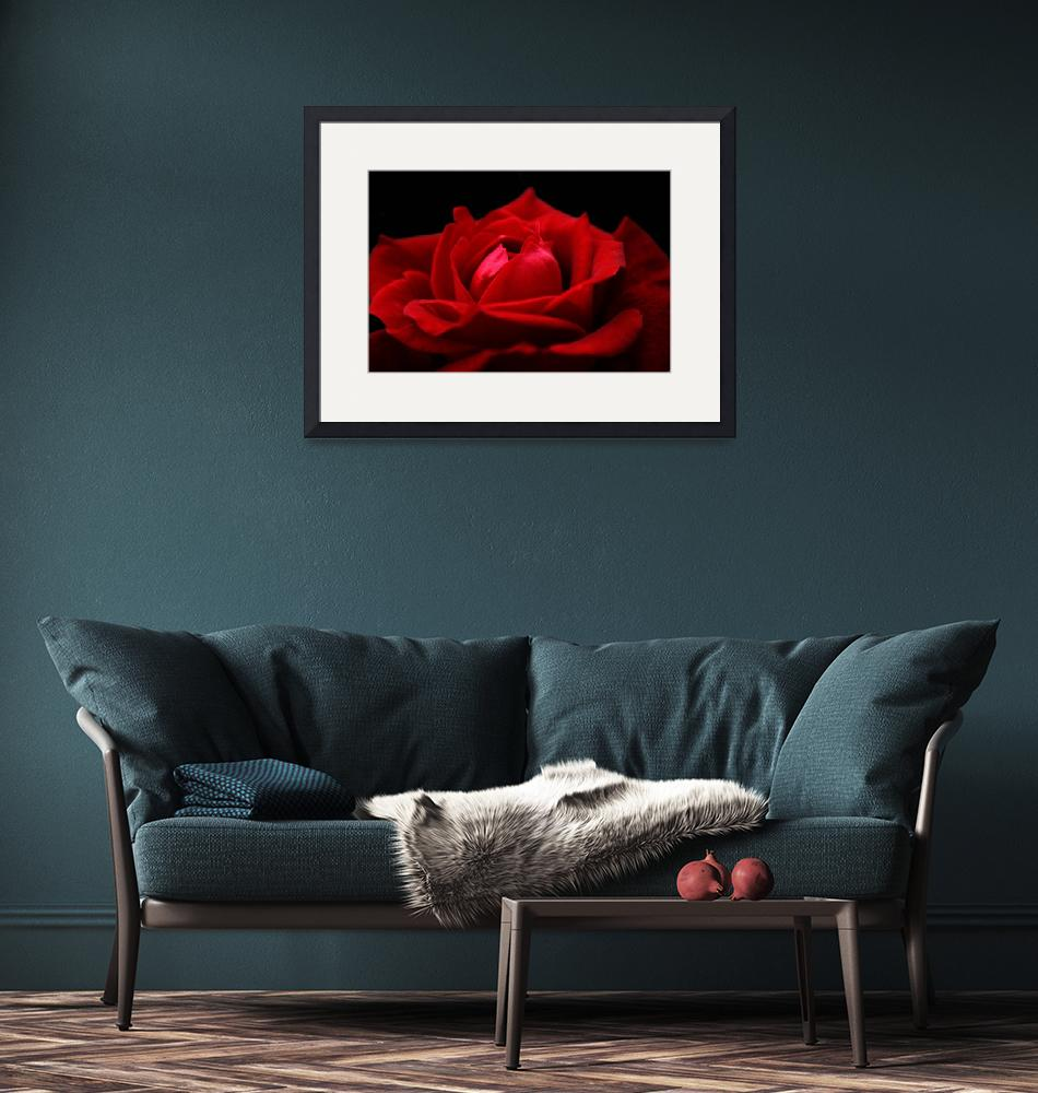 """""""Red Rose""""  (2009) by aviaperture"""