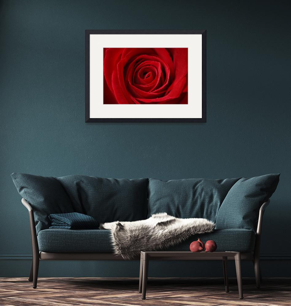 """""""The Red Rose""""  (2011) by annayanev"""