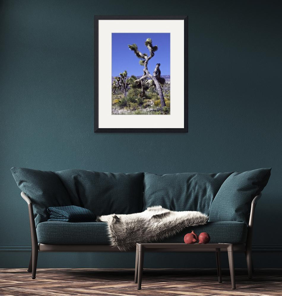 """""""Joshua Trees on the March""""  (2008) by bill_white"""