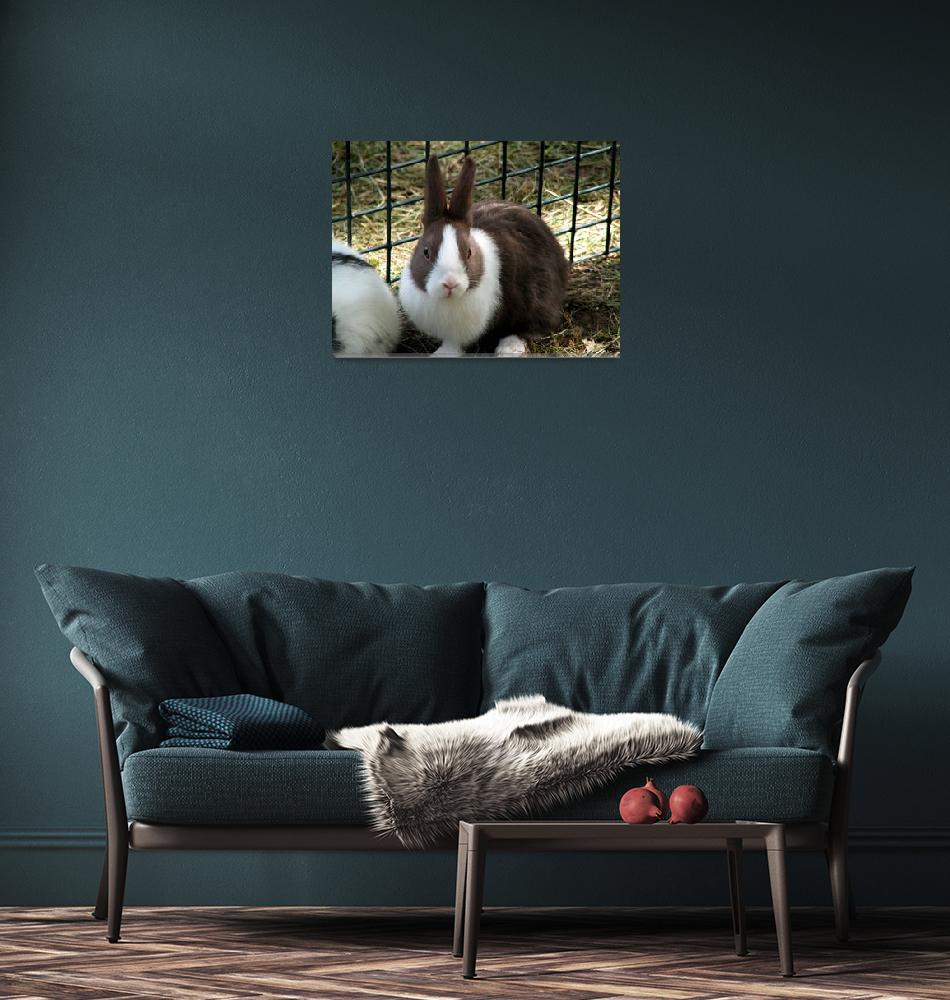 """Bunny Looking Lonesome""  (2008) by alisonwest"