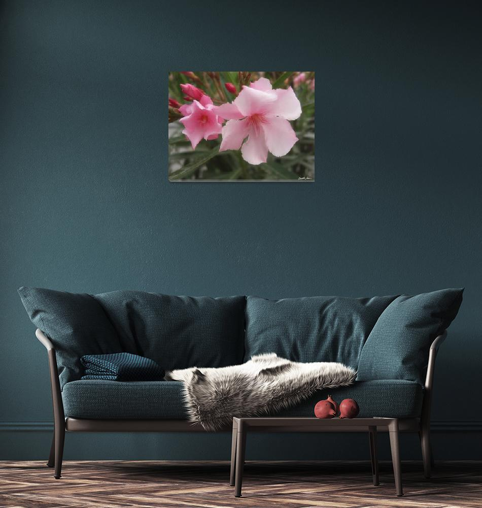 """Single Pink Oleander 9""  (2010) by ChristopherInMexico"