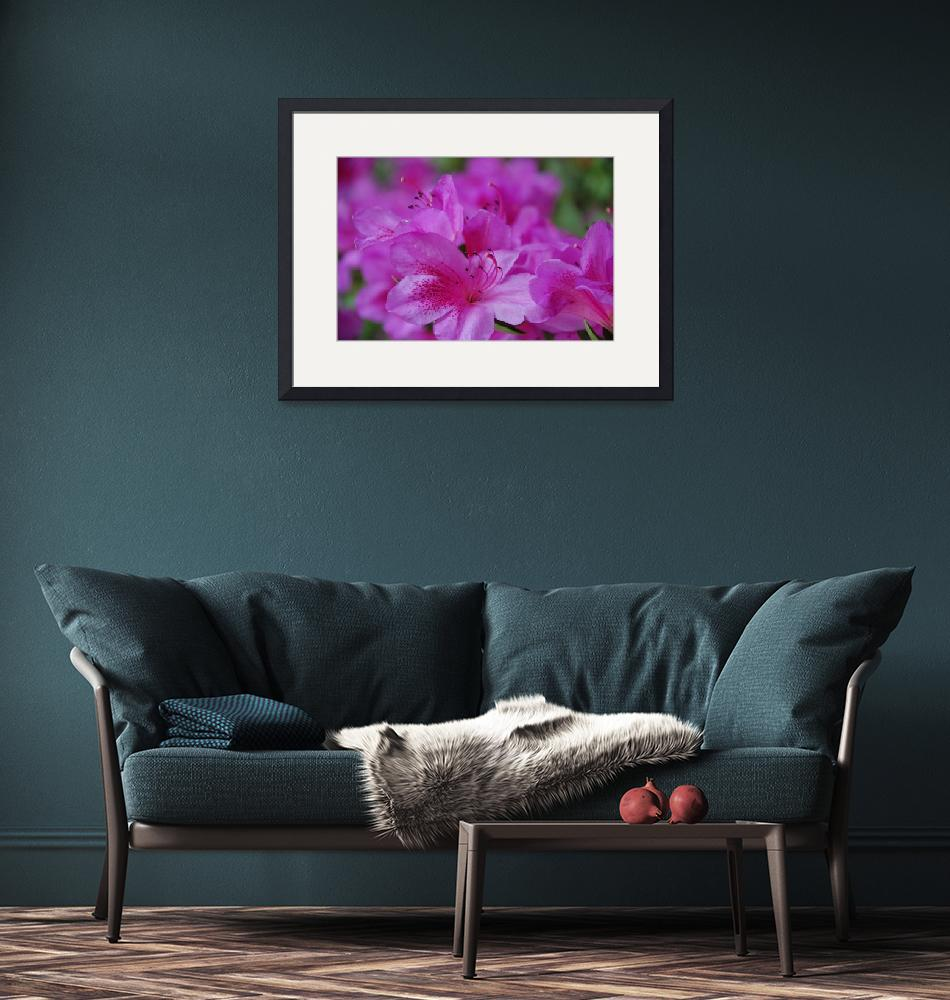 """""""Pink Azalea""""  (2010) by overbeck"""