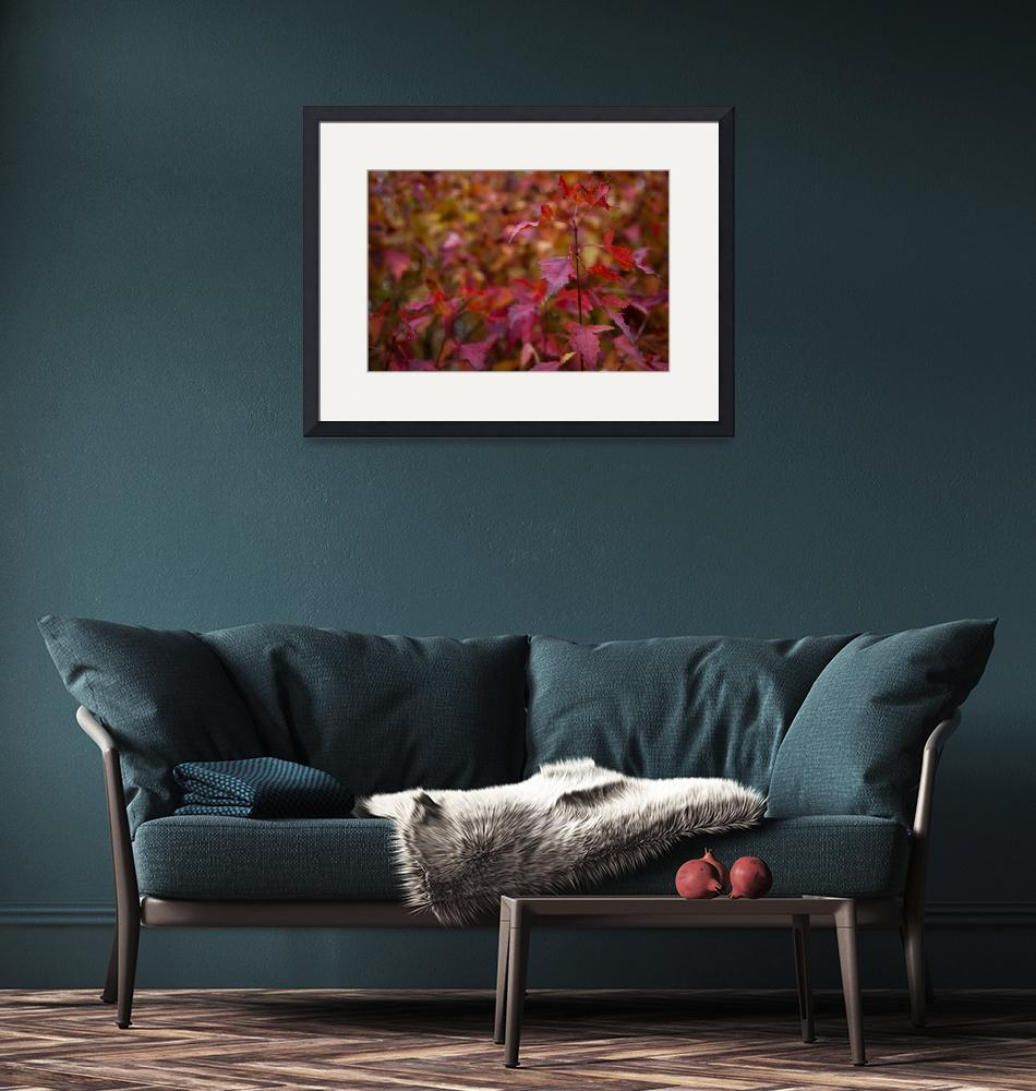 """""""Autumn Red Leaves""""  (2012) by WaynePhotoGuy"""