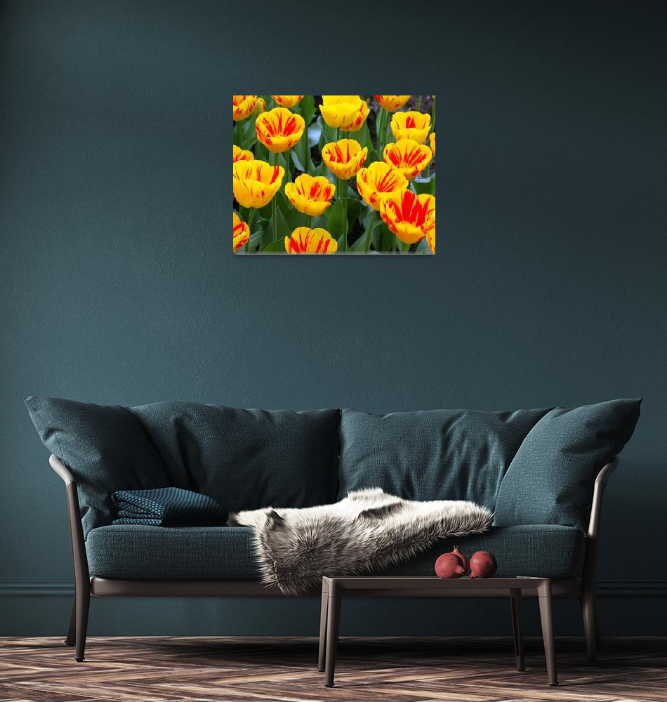 """""""Yellow and Red Tulips Upclose""""  (2007) by NateLancer"""