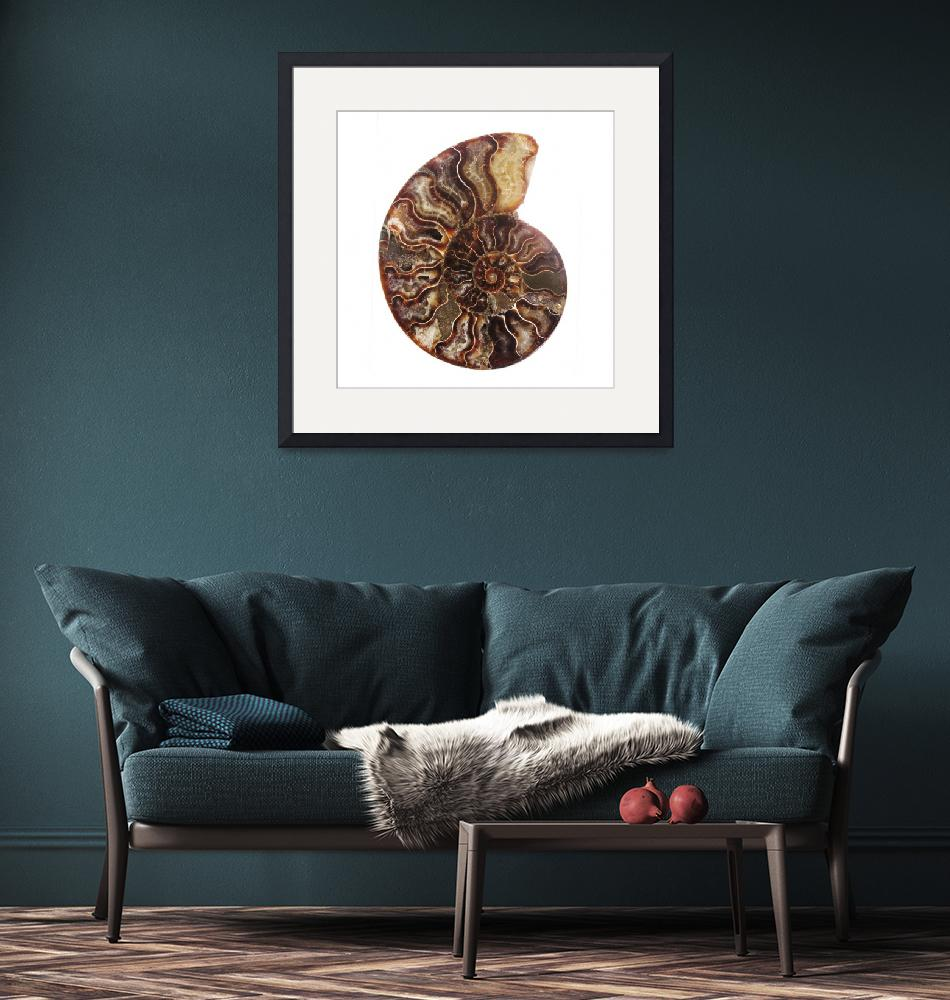 """IMG_1689 Ammonite"" by DirkDarkroom"