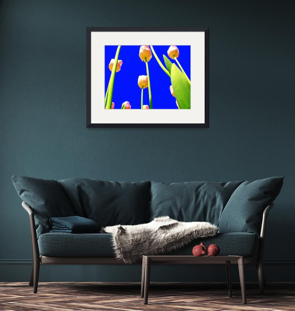 """""""Tulips with Blue Sky I""""  (2008) by michellecalkins"""