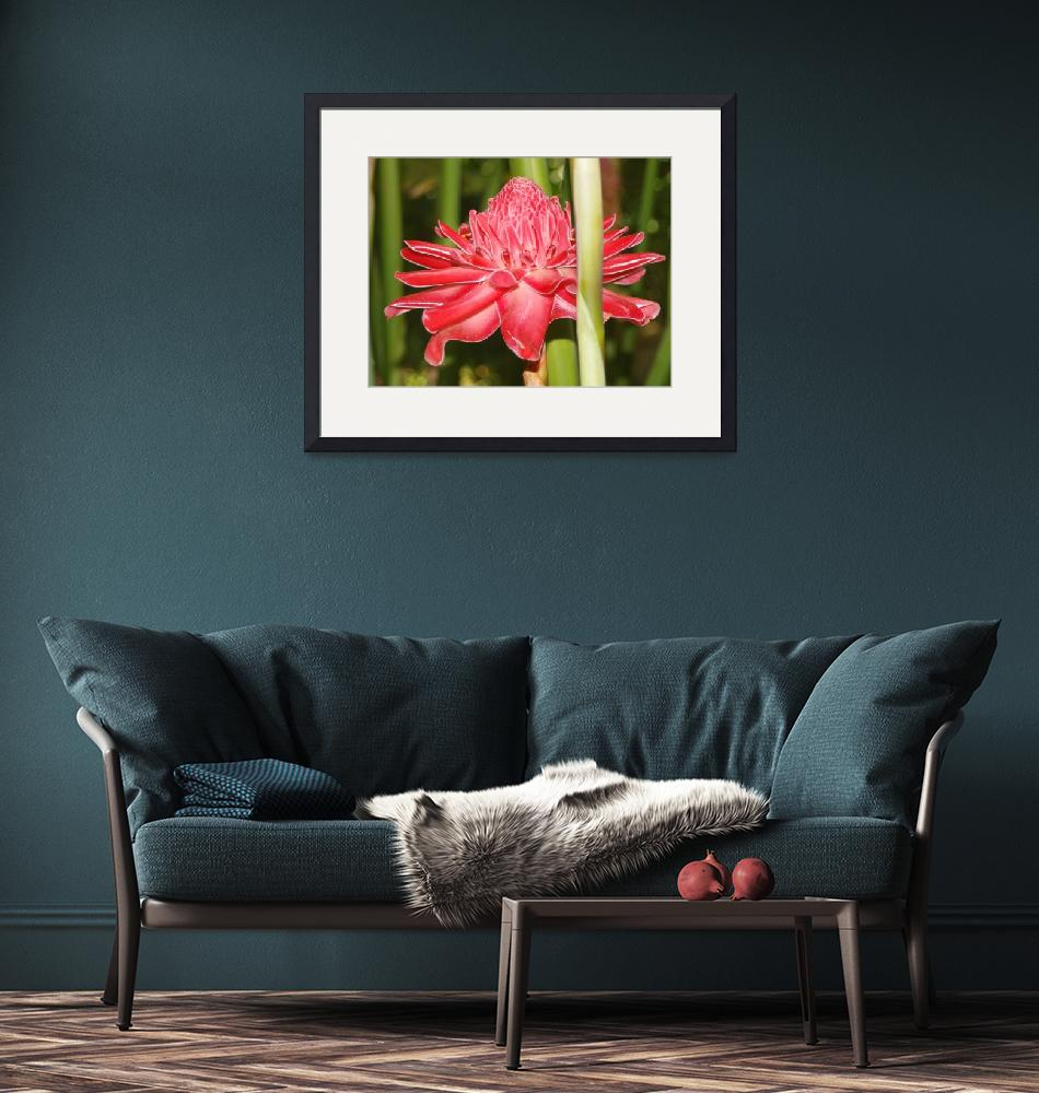 """""""Red Torch Ginger.""""  (2015) by easel"""