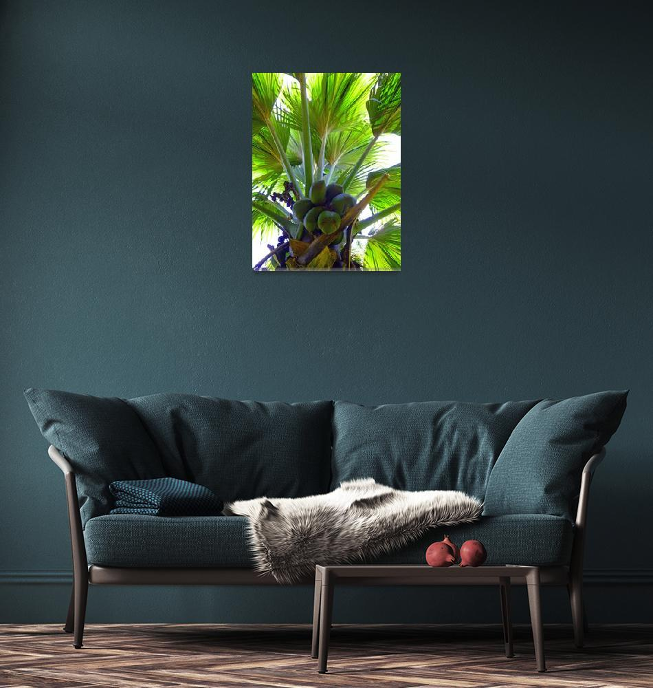 """Double Coconut palm""  (2012) by joeyartist"