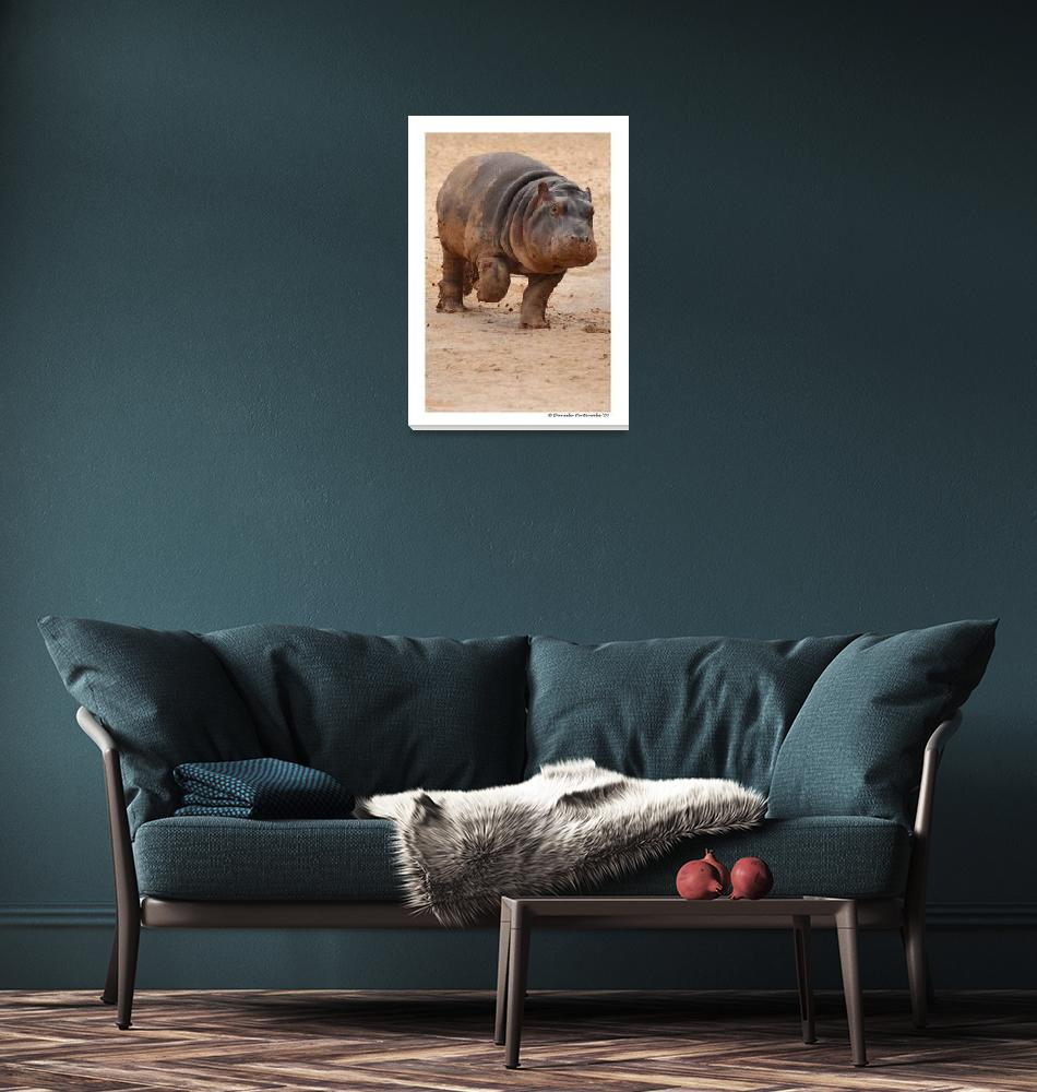"""""""Baby Hippo on the Run""""  (2009) by WildVisuals"""