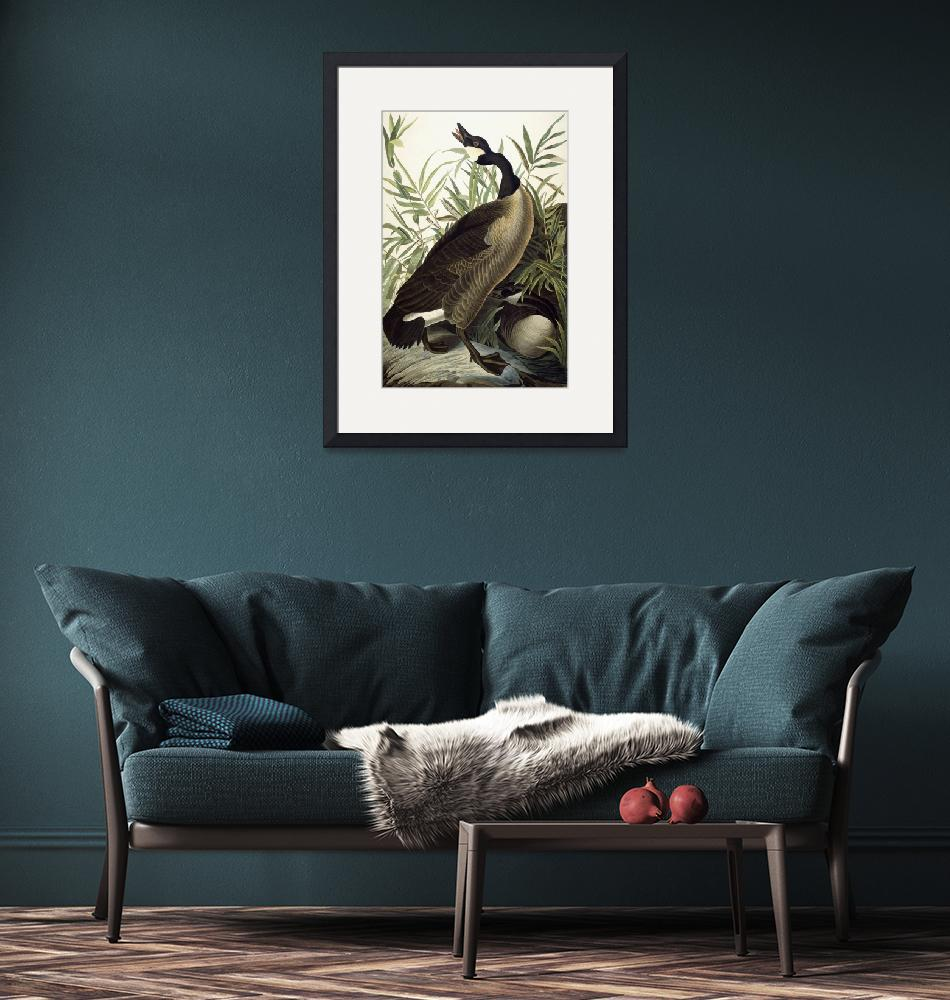 """""""Canada Goose""""  by fineartmasters"""