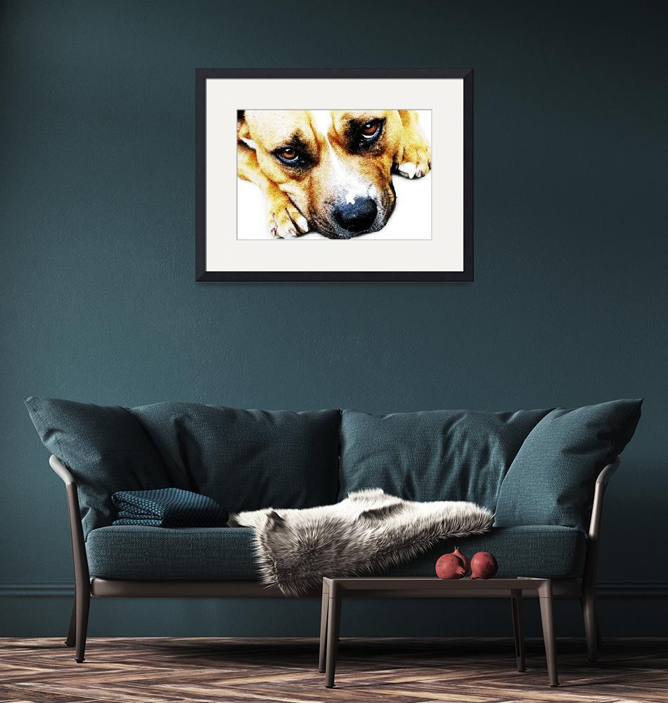 """Bull Terrier Eyes""  (2010) by ModernArtPrints"