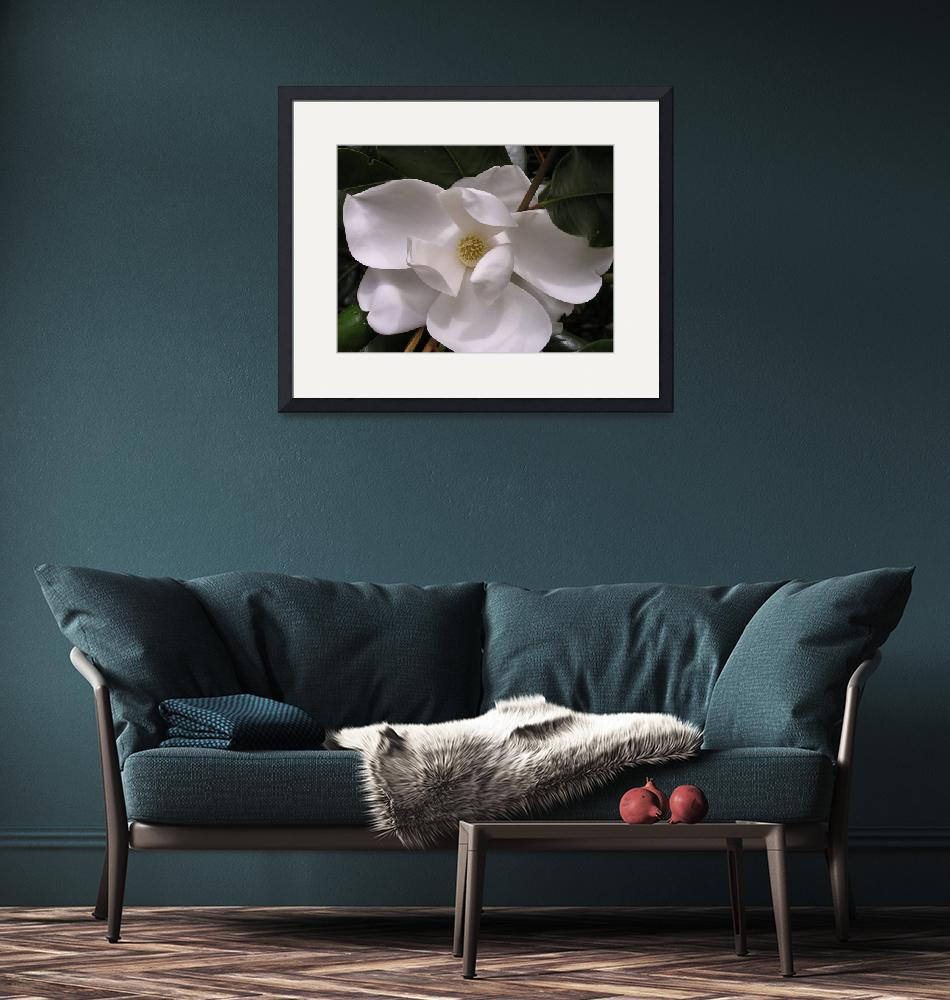"""White Magnolia""  (2006) by bettymackey"