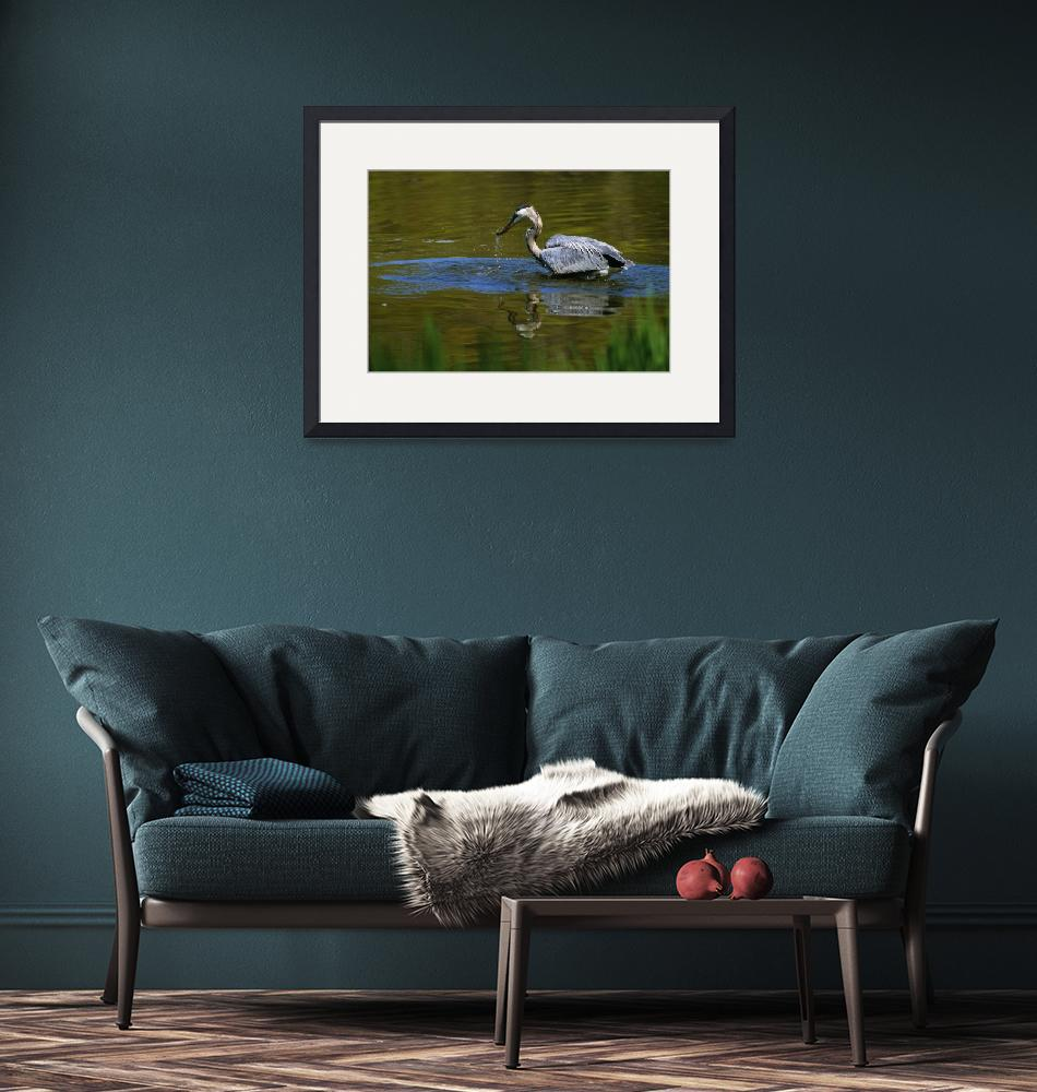 """""""Great blue heron fishing in water""""  by Panoramic_Images"""