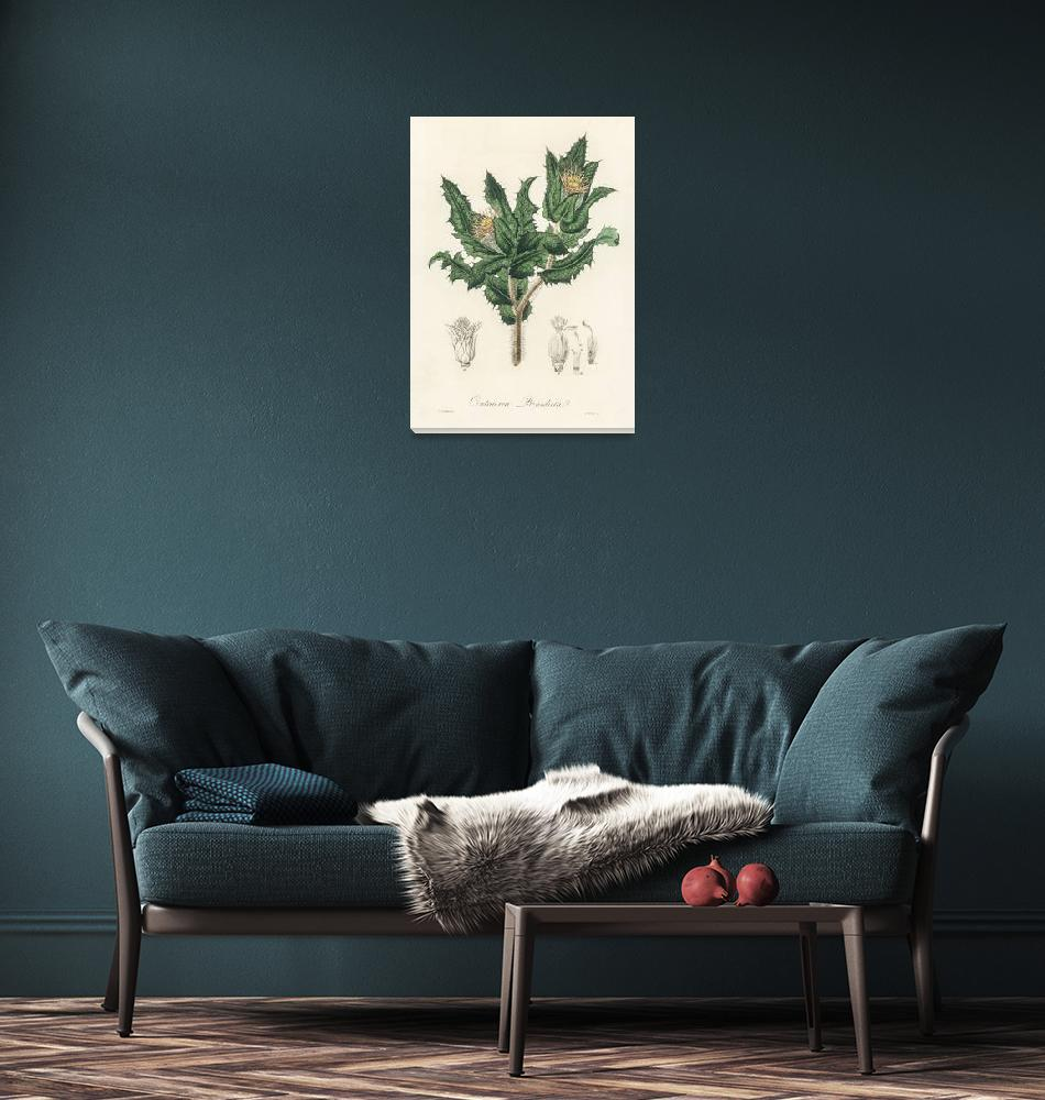 """Vintage Botanical Holy thistle""  by FineArtClassics"