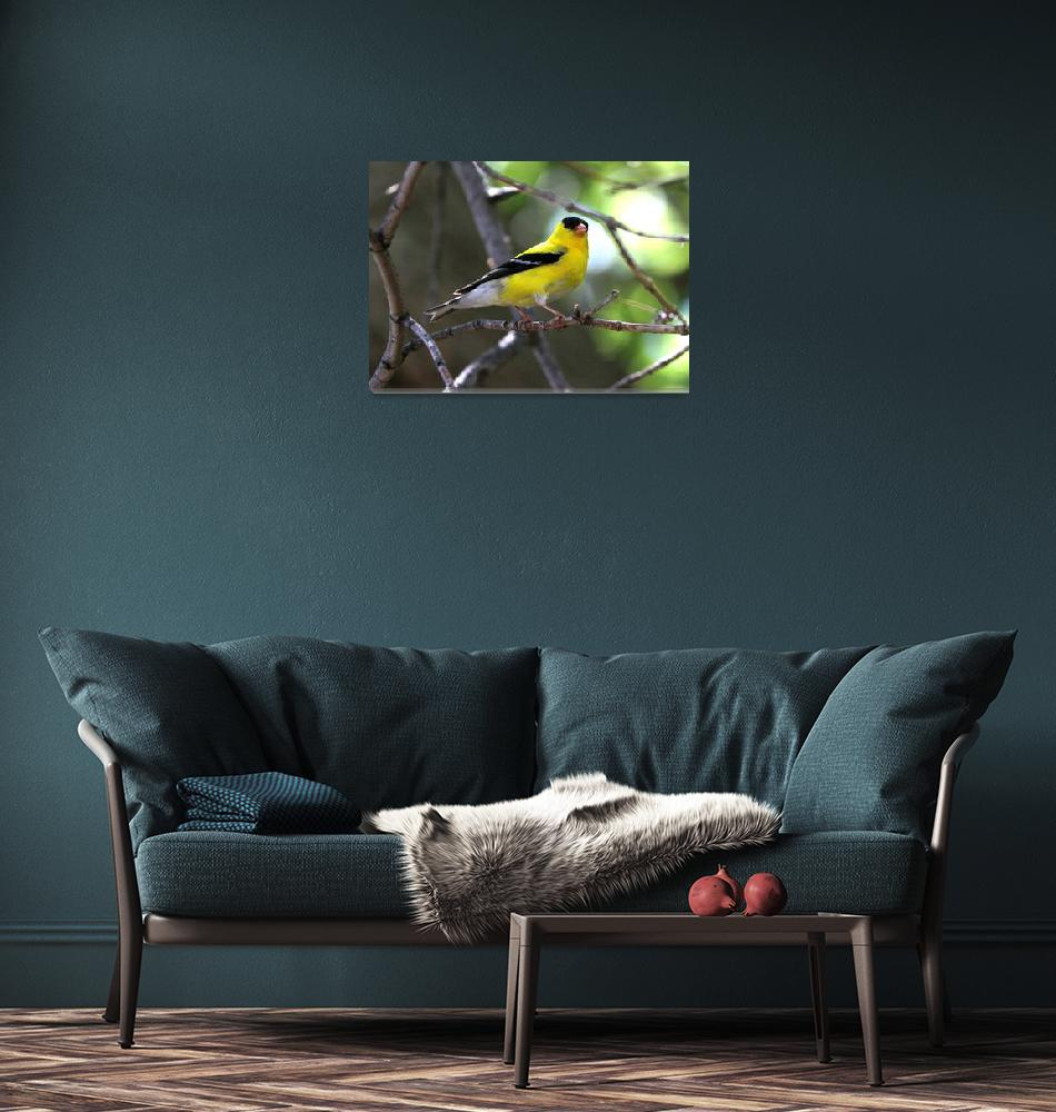 """""""Gold finch""""  (2014) by cameragal"""