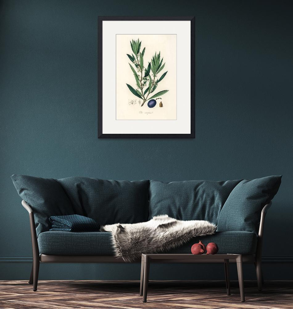 """Vintage Botanical Olive""  by FineArtClassics"